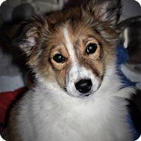 Adopt A Pet :: Stella - Plainfield, IL