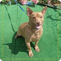 Adopt A Pet :: MCSQUEZE - Marietta, GA