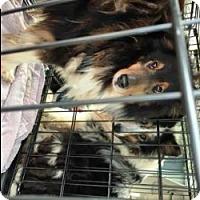 Adopt A Pet :: JAQ - Dublin, OH