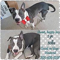 Adopt A Pet :: CYBER - hollywood, FL