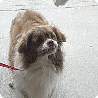Adopt A Pet :: Ricky - Hazard, KY