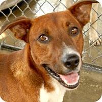 Adopt A Pet :: ROSCOE (courtesy post) - Hendersonville, TN