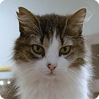 Adopt A Pet :: Cher - Naples, FL