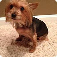 Adopt A Pet :: Dee Dee - Cheyenne, WY