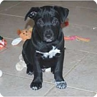 Adopt A Pet :: Tux - Minneola, FL