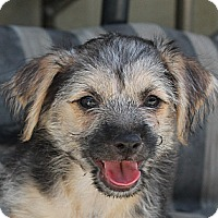 Adopt A Pet :: Fritz - La Habra Heights, CA