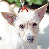 Adopt A Pet :: Olaf - Woodland, CA