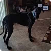 Adopt A Pet :: Ryker in Tucson - Phoenix, AZ