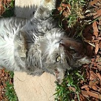 Adopt A Pet :: Groucho - Walnut Creek, CA