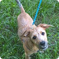 Adopt A Pet :: Buster - Orlando, FL