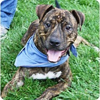 Adopt A Pet :: Andrew - Huntley, IL