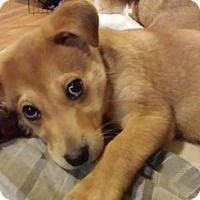 Adopt A Pet :: Charlie - Saskatoon, SK