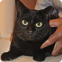 Adopt A Pet :: SILKY-Low fee-VIDEO! (NSB, FL) - New Smyrna Beach, FL