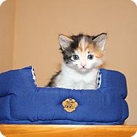 Adopt A Pet :: Kitten 6 - Atlantic, NC