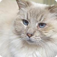 Adopt A Pet :: Cupcake - Alameda, CA