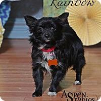 Adopt A Pet :: Rainbow - Valparaiso, IN