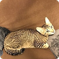 Adopt A Pet :: Evie - Tampa, FL