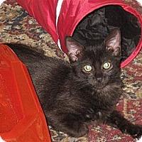 Adopt A Pet :: Shiloh - Port Republic, MD