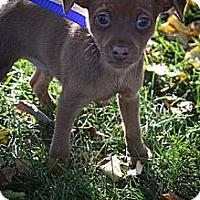 Adopt A Pet :: Waterloo - Broomfield, CO