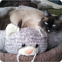 Adopt A Pet :: Lisa Maree - Anchorage, AK