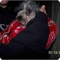 Adopt A Pet :: Nana - Honaker, VA