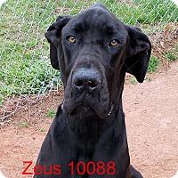 Adopt A Pet :: Zues - Greencastle, NC
