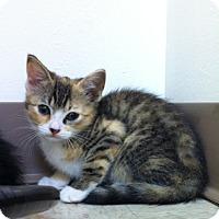 Adopt A Pet :: Penelope - Trevose, PA