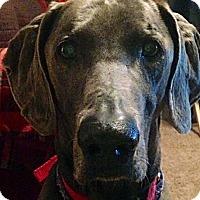 Adopt A Pet :: Valentino - Grand Haven, MI