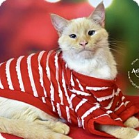 Adopt A Pet :: rondo - Philadelphia, PA
