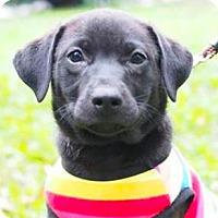 Adopt A Pet :: Spike - San Ramon, CA
