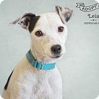 Adopt A Pet :: Leia - Phoenix, AZ