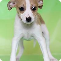 Adopt A Pet :: Emily - Waldorf, MD