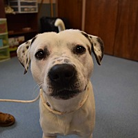 Adopt A Pet :: Miles - Bay Shore, NY