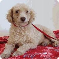 Adopt A Pet :: Toby - Austin, TX