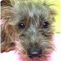 Adopt A Pet :: dallas - pasadena, CA