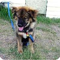 Adopt A Pet :: Fizgig - Scottsdale, AZ