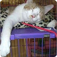 Adopt A Pet :: Custard - Chesapeake, VA