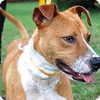 Adopt A Pet :: River - Gainesville, FL
