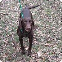 Adopt A Pet :: PAIGE LENORE - Houston, TX