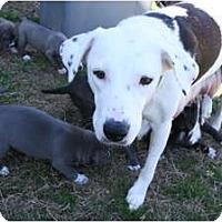 Adopt A Pet :: Mommy- COURTESY LISTING - Killen, AL