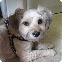 Adopt A Pet :: Benji - Ormond Beach, FL
