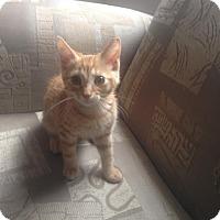 Adopt A Pet :: Pee Wee/Marley - McDonough, GA