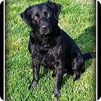 Adopt A Pet :: Luke - Indian Trail, NC