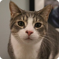 Adopt A Pet :: Fester - Byron Center, MI