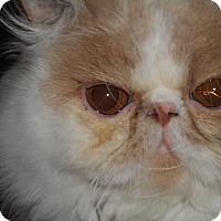 Adopt A Pet :: Bruno Mars - Columbus, OH