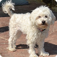 Adopt A Pet :: Lois - Simi Valley, CA
