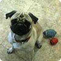 Adopt A Pet :: Otis - Framingham, MA