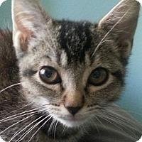 Adopt A Pet :: Gwen - Irvine, CA