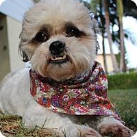 Adopt A Pet :: WIZARD - Los Angeles, CA