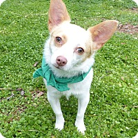 Adopt A Pet :: Minky - Mocksville, NC